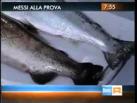 """riconoscere il """"vero"""" salmone!"""