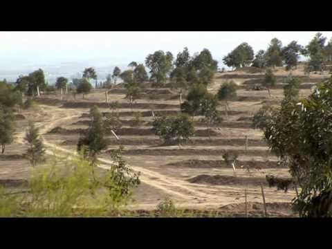 Planting Trees – Pushing Back the Desert