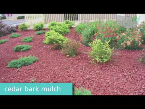 Springtime gardening tips for the Northeast