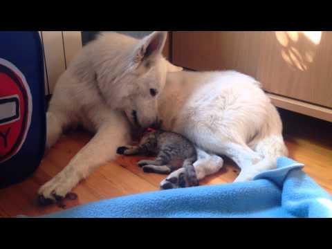 主人以為愛犬醒來發現身邊有陌生小貓咪時會引發貓狗大戰,怎知接下來所看到的畫面讓她超意外!