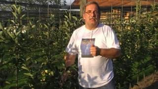 #96 Eine neue Apfelsorte entsteht I: A1/05