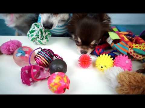 Собака Блогер Пародия, собачий блог Меджик Фемили