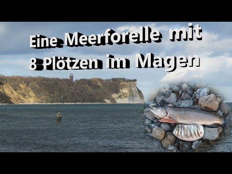 Watfischen auf Rügen Februar 2019 - Meerforelle / Osts ...