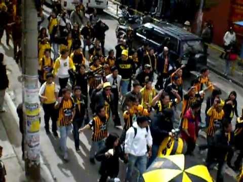 Tigre Campeon y la Ultra Sur - La Gloriosa Ultra Sur 34 - The Strongest