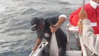 Kingscliff Australia  city photos : Spanish Mackerel Fishing -kingscliff australia