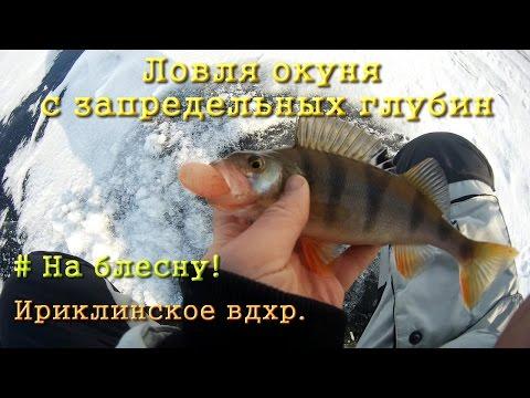 ловля глубинного окуня зимой