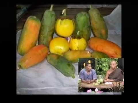 ตอนมะละกอและขยายพันธุ์กล้วย2.flv