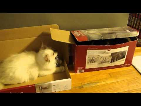 0 Ragdoll Cats in Boxes