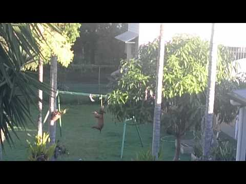 Ever seen a dog with it's own swing set?