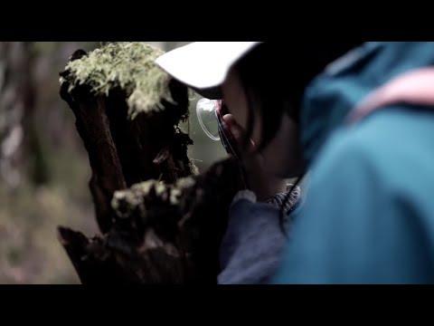 30秒の旅|白駒の池・苔の森【30 seconds trip】