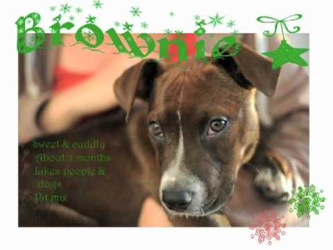 dogs at the holidays - All these awesome adoptable dogs want is a home for the holidays!