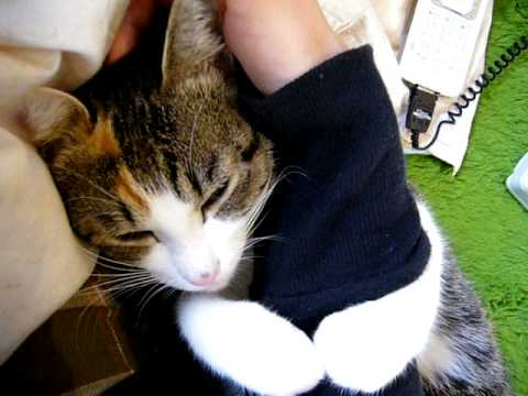 「[ネコ]腕に抱きつく最高に甘えん坊な猫ちゃん。」のイメージ