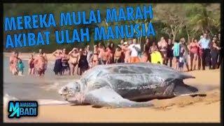 Video MONSTER LAUT Ini Menampakan Dirinya Untuk MEMPERINGATKAN Kita yang Sering Merusak Lautan MP3, 3GP, MP4, WEBM, AVI, FLV September 2018