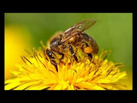 Ouverture de la Semaine européenne des abeilles 2017