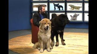PETSHOW επεισόδιο 14/12/2016