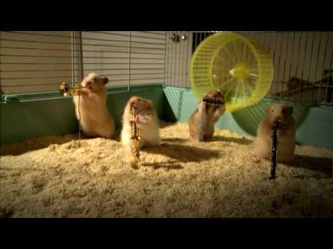 Hamster Natalinos em ritmo de jazz - uma fofura!