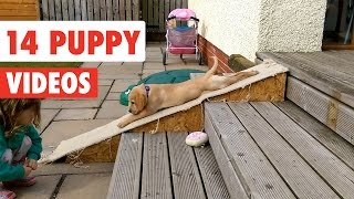 Nonton 14 Funny Puppy Videos Compilation 2017 Film Subtitle Indonesia Streaming Movie Download