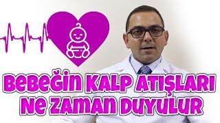 Op.Dr. Filip Taşhan - Bebeğin Kalp Atışları Ne Zaman Duyulur