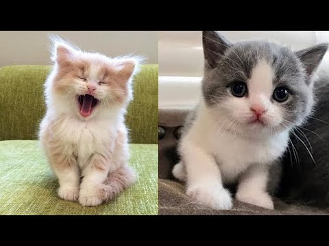 Baby Cats - Cute and Funny Baby Cat Videos Compilation