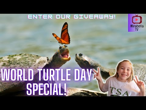 World Turtle Day! Mirabella TV partnering with American Tortoise Rescue and Turtle Survival Alliance