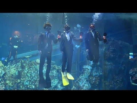 Aquarium in Japan begrüßt neue Angestellte mit einer Un ...