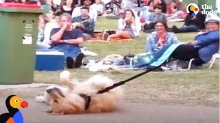 Download Youtube: Dog PLAYS DEAD to Avoid Going Home While Park Crowd Watches | The Dodo