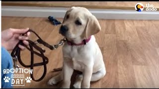 Guide Dog Gets So Excited When She Sees Her New Home - SMUDGE | The Dodo Adoption Day by The Dodo