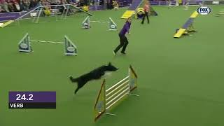 Verb captures 2019 WKC Masters Agility Grand Champion title   FOX SPORTS   YouTube