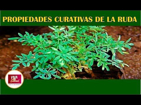 Peso ideal - Esta planta CURA la retención de líquidos, bajas de peso, elimina las várices y las inflamaciones