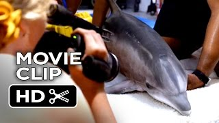 Nonton Dolphin Tale 2 Movie Clip   When That Truck Arrives  2014    Harry Connick  Jr Dolphin Drama Hd Film Subtitle Indonesia Streaming Movie Download