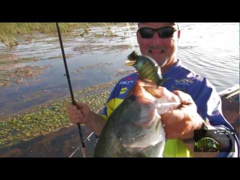How Fish The Shell Cracker G2 By Black Dog Baits