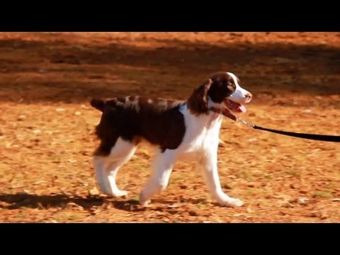 eHowPets - Follow eHow Pets for regular tips from Victoria Stilwell and more: http://www.youtube.com/subscription_center?add_user=ehowpets Candace is learning to walk o...