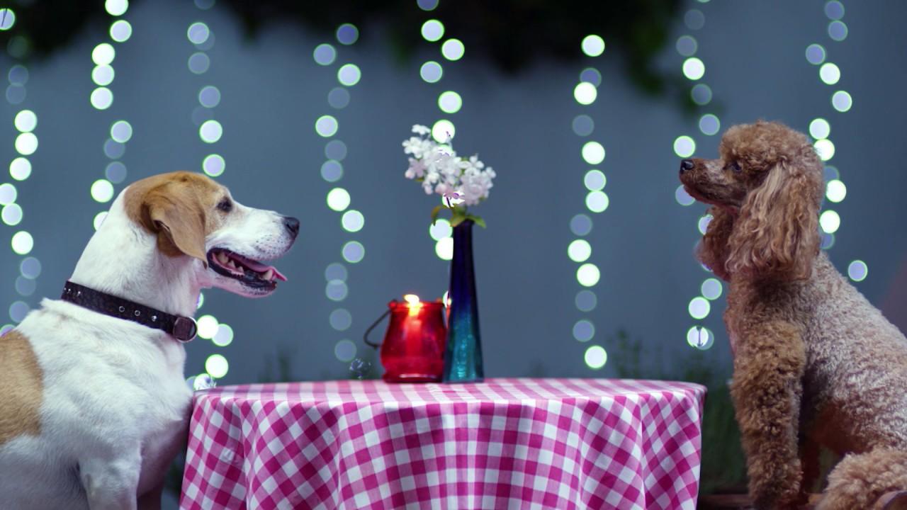 Το δείπνο του σκύλου | #EUandMe