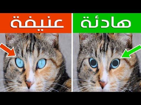 العرب اليوم - شاهد: 16 علامة خفية عن القطط