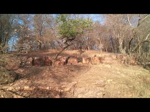 Spotted Deers in Ranthambore National Park and Tiger Reserve
