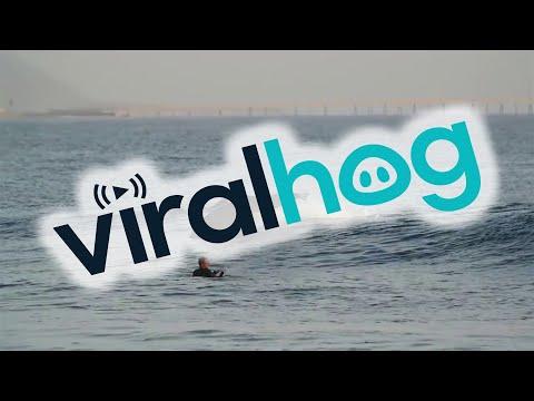 Delfiini liittyy surffareiden joukkoon – Hieno show!
