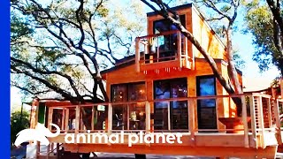Sleek And Modern Treehouse With An Outdoor Shower | Treehouse Masters by Animal Planet
