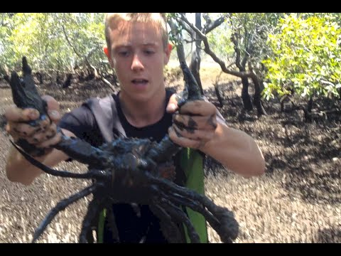 BACON OF THE SEA – Mud Crabs caught BAREHANDED – Catch n Cook | TDB