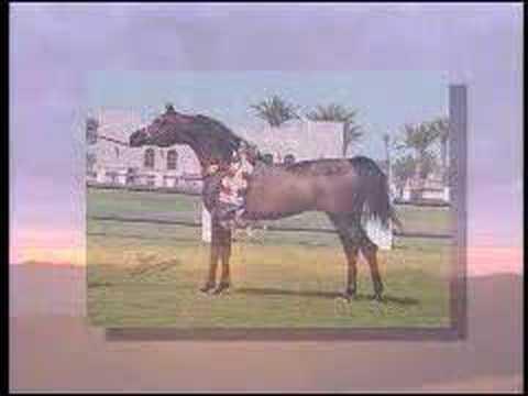 Gazal Al Shaqab