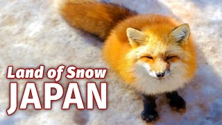 We visit Fox Village and enjoy snow whilst nearly getting frostbite in a horrific blizzard.► DISCOVER Fox Village: https://goo.gl/JVcLKJ► SEE Snow Monsters: https://goo.gl/PbLVZ1► GET ideas for places to see in Tohoku: http://news.gogotohoku.jp/