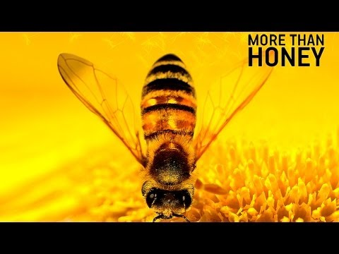 """More than Honey"" 
