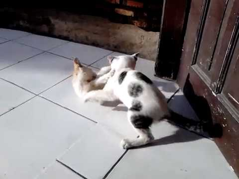 Funny fight cat 2