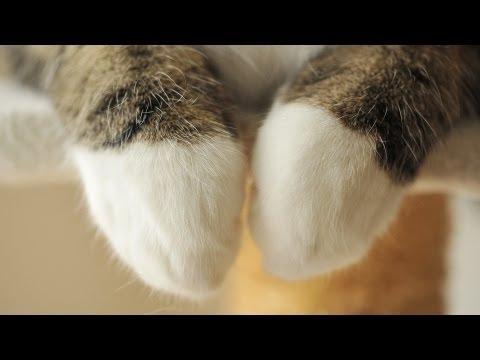 原來小貓咪的前面兩手長這樣子!實在是太....