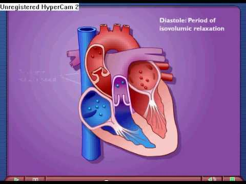Cardiac Cycle – Systole & Diastole