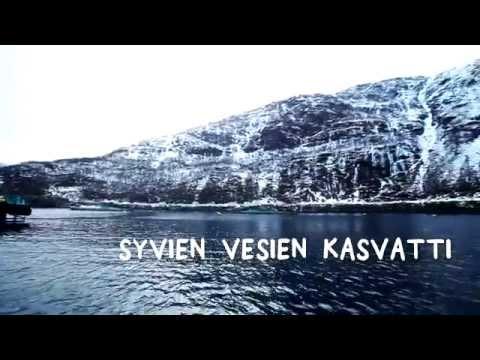 Kalankasvattamolta kauppaan - näin norjalainen lohi matkaa Suomeen