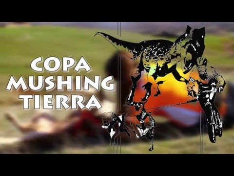 Copa de España de Mushing en Salas de los Infantes