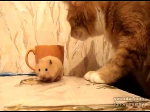 當貓咪遇到老鼠的那一瞬間…一切就發生了!!