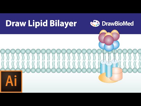 Graphical Abstract Tutorials| Draw Cell Membrane | Life Science Illustration