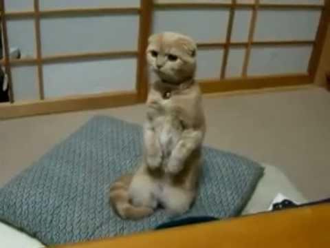 Смешные кошки лучшие коты 2010 года