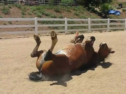 Horse Passing Gas